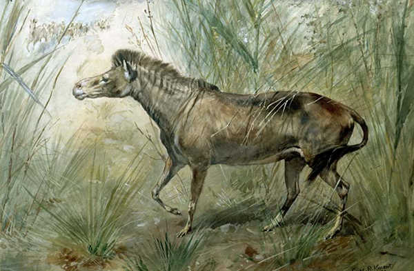 Hi! I'm an Orohippus, an extinct Horse Cousin. Image courtesy The Equinest
